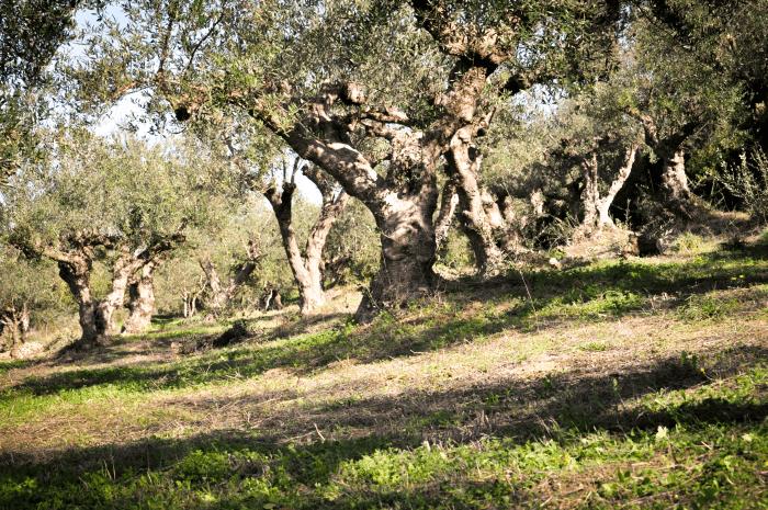 Was ist ein fairer Preis für 1 Liter extra natives Olivenöl?